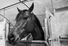 Fattoria Iacchelli (pierobacarellaph) Tags: 25aprile 25aprile2017 agriristoro agriturismo animali brace cavalli cavallo famiglia fattoria fattoriaiacchelli forno iacchelli velletri lazio italia it