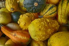 Gourds (gabi-h) Tags: gourds stilllife autumn harvest gabih orange yellow stripes farmstand princeedwardcounty warts bumps