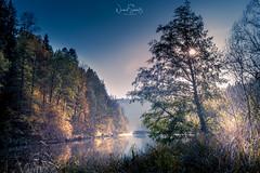 """Fascinating nature ... river Ilz, Bavarian Forest (nigel_xf) Tags: gutfeuerschwendt """"bavarian forest"""" """"bayrischer wald"""" niederbayern sun sonne abendsonne deutschland germany bayern bavaria """"ferien mit hund"""" """"holiday with dog"""" nikon d750 nigel nigelxf vsfototeam forest wald bäume trees herbst autumn herbstfarben """"autumn colors"""" landschaft landscape berge hügel hills mountains """"neukirchen vorm ilz flus river nature naturidylle idyll gegenlicht"""