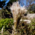 Grass thumbnail