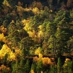 Forest Colours thumbnail