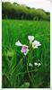 Blumen geflüster (DM Fotografie) Tags: flower wiese blumen sommer summer 2017 dmfotografie