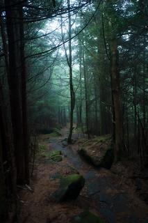 Richard Balsam Trail