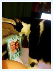 20170809_223630_Fotor (Bernsteindrache7) Tags: summer color cat animal tiere house home indoor pet katze