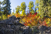 Fish Lake, Oregon, Lava Rocks with Fall Foliage (lessa.clayton) Tags: fishlake oregon lavarocks fallfoliage