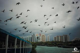 Birds Under Typhoon。