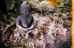 The Supreme cannot be found amongst the things that are visible. (brenkee) Tags: lomography lomo ussr minitar lca 35mm colorfilm c41 faked grain expired lightleak lofi film analog buyfilmnotmegapixels filmisnotdead buddha buddhist calm ferns nature statue park