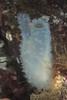 Glassy Sea Squirt (Ascidia paratropa) (jonmcclintock) Tags: adventure diving travel britishcolumbia bc canada scuba underwater strongwater