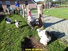 """2017-10-27       Raalte 4e dag     33 Km  (85) • <a style=""""font-size:0.8em;"""" href=""""http://www.flickr.com/photos/118469228@N03/24173316378/"""" target=""""_blank"""">View on Flickr</a>"""