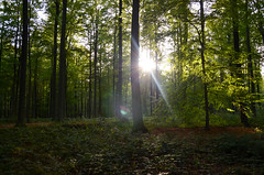 Forêt de soignes, Brussels 3 (gavin.mccrory) Tags: forest nature nikon camera photo trees brussels belgium europe d5100 35mm 105mm dslr photography outside green shrubs plants forests light sunshine reflection rays woodlands