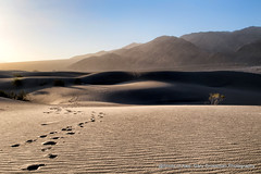 Into The Desert (Gary Grossman) Tags: deathvalley dunes desert garygrossman garygrossmanphotography mountains mesquitedunes sand sanddunes landscape landscapephotography earlymorning dawn nature footsteps steps tracks nationalpark california