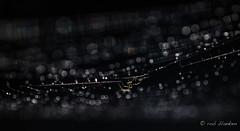 Little Kingdom (6) (Rob Blanken) Tags: spider bokeh web dew lowkey