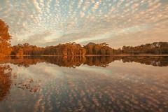 Lake MacDonald reflections (Allieca Paterson) Tags: allieca cloudsstormssunsetssunrises australia lakemacdonald noosa queensland sunset sunshinecoast