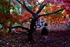 Westonbirt Arboretum, England (milia imagines) Tags: a6500 sony autumn colours leaves trees arboretum westonbirt
