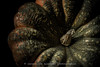 304/365 - Boo! (Jacqueline Sinclair) Tags: pumpkin squash green orange texture stem picked pick harvest garden bumpy orangedecorations flickrfriday