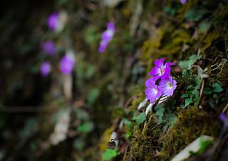 a flower is as good as a prayer [EXPLORE]
