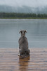 Solitude (Following Keaton) Tags: vermilionlakes dog lake landscape nature schnauzer wilderness