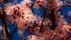 Libre sutileza (ojoadicto) Tags: flores flowers nature naturaleza delicate primavera spring