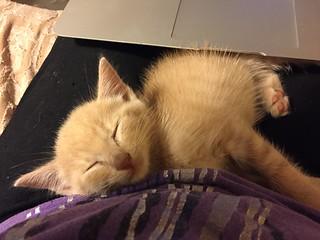 Sleepy Jimmy