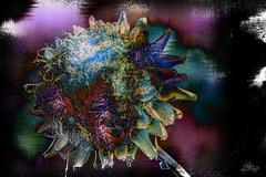 Calidoscopio (seguicollar) Tags: alcachofa vegetal planta imagencreativa photomanipulación art arte artecreativo artedigital virginiaseguí calidoscopio color colorines blue azul pink rosa negro noir black