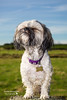 Ruudy (twinnieE) Tags: dogphotographer dogphotography dog doggy pup zuchon cutie pet petphotography pooch