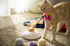 Smartphone Controlled Interactive Cat Toy (mywowstuff) Tags: