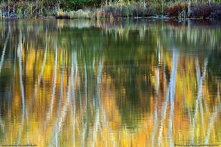 Impressions on a Maine Lake