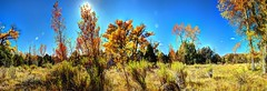 Autumn on the Rio Chama (JoelDeluxe) Tags: riochama wildscenic river autumn october 2017 landscape panorama hdr newmexico nm water rocks trees grass sky joeldeluxe