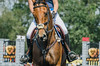 Meg Bradley (onapaperplane) Tags: horse horses equine equestrian thoroughbred warmblood makeover rrp unionville pa plantation field event eventing 3day eventer dressage show juming sj xc cross country jumping tack cwd devoucoux animal planet animalplanet riding ride pro amateur trainer