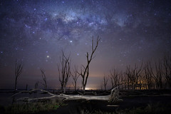 On the other side of the fallen tree (karinavera) Tags: longexposure night photography ilcea7m2 fallentree epecuen abandoned stars starry milkyway sky