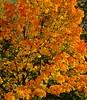 Herbstleuchten - Autumn light up (fleckchen) Tags: herbst herbstlich herrlich heimat herbststimmung herbststimmungen herbstimpressionen autumn bäume baum natur tree laub laubbaum licht