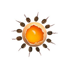 how breakfasts are made (brescia, italy) (bloodybee) Tags: eggs shell crack break coffee bean food drink breakfast fecundation fertilization birth conception spermatozoon ovule eggcell humor fun stilllife square yolk