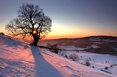 drh01124P (m-klueber.de) Tags: drh01124p drh01124 20090110 2009 hohe rhön hochrhön winter himmeldunk himmeldunkberg hexenbuche hexenbuchen buche baum schnee sonnenaufgang morgen mkbildkatalog bildauswahl portfolio