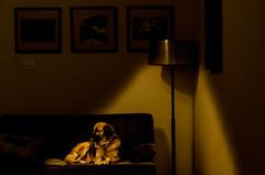 Foto- Arô Ribeiro -6814-2 (Arô Ribeiro) Tags: dog arte luz light arôribeiro colorphotoaward color