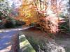 Herbst an der Eyach (Schwarzwald) (thobern1) Tags: eyach brotenaubach enz schwarzwald badenwürttemberg nordschwarzwald germany herbst autumn