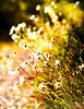 DSC01476_edit (Wild Canoe Photography) Tags: knoydart sony minolta 135mm rokkor