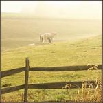Horse Fence thumbnail