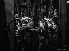 Darkness in Diagon Alley (Little Hand Images) Tags: human head skeleton jawbone teeth filmnoir surreal universalstudios harrypotter orlando florida diagonalley