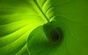 Canna Wallpaper (mary13phary) Tags: 1280x800 1440x900 1680x1050 1610 1920x1200 canna cannalily cannaceae creativecommons abstract abstractnature background closeup colors design desktop green leafs lines macro minimalist pattern plantae plants texture tropical wallpaper widescreen