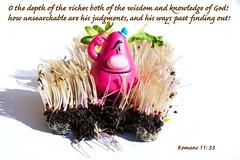 Romans 11:  33 (Leonard J Matthews) Tags: newtestament bible scripture quote romans1133 mythoto provoke thought kjv kingjamesversion pink growth bluehat wisdom knowledge unsearchable judgements shadow riches depth sprouts dirt inexplore