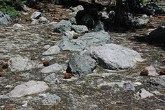 Volcanic debris flow deposit (upper Holocene, May 1915; Devastated Area, Lassen Volcano National Park, California, USA) 7 (James St. John) Tags: devastated area volcanic debris flow deposit 1915 mt lassen peak volcano national park california cascade range
