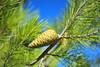 GrEEn (sifis) Tags: green nature greece sakalak nikon d700 2470 sky blue
