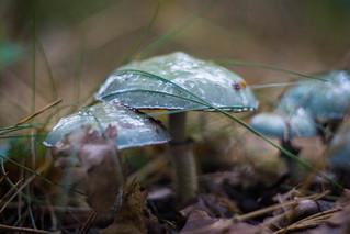 The Secret World of Mushrooms - Part 15