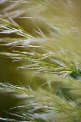 Softness ... (Julie Greg) Tags: grass nature park softness canon5dmarkiv