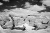 batesford-0762-ps-w (pw-pix) Tags: tree trunk dead fallen twisted grain pattern limb branch grass rock rocks granite greenstone ancient outcropping weathered cracked weathering lichen dry sunny cloudy sky clouds bw blackandwhite monochrome sonya7 irconvertedsonya7 850nminfrared ir infrared dogrocks dogrocksreserve batesford neargeelong geelong victoria australia peterwilliams pwpix wwwpwpixstudio pwpixstudio