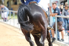 _MG_5963 (dreiwn) Tags: ridingarena reitturnier reiten reitplatz reitverein reitsport ridingclub equestrian showjumping springreiten horse horseback horseriding horseshow pferdesport pferd pony pferde tamronsp70200f28divcusd