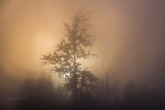Autumn Morning (jeanmarie's photography) Tags: trees moody nature landscape nikon nikond810 pnw clouds sky mist foggy sunrise morning jeanmarieshelton