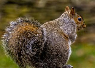 A Squirrel at sunrise....