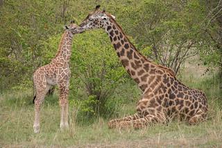 African Safari. Tenderness.