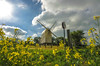 windmill and flowers (Paul Wrights Reserved) Tags: windmill flowers flower yellowflowers sky clouds bluesky sun summer scene scenic grass yellow green speed sign landscape building historic traditional english countryside